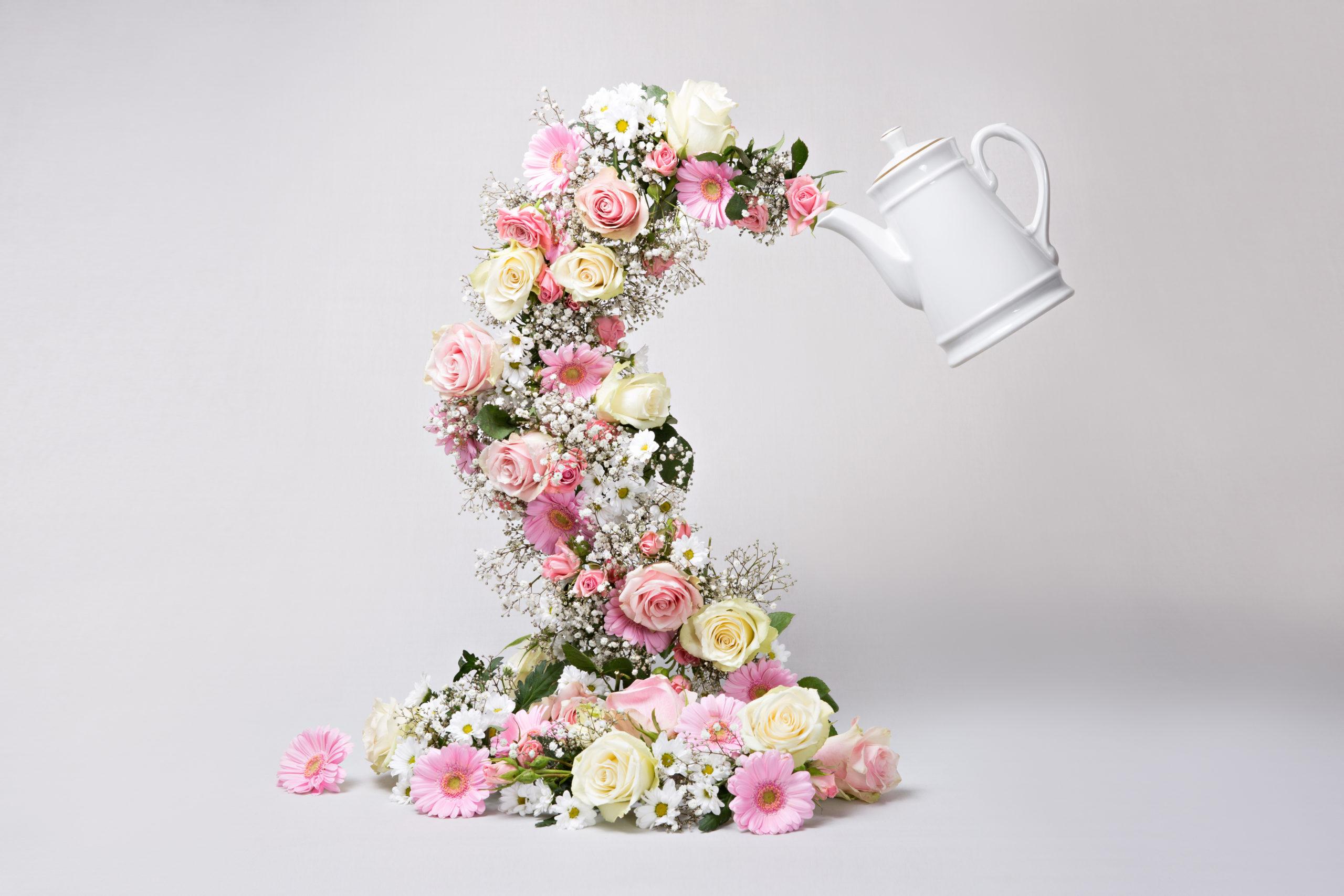 Sarah Baboro Photographe Shooting Photo Lille Nature Morte Composition Flowers Fleurs
